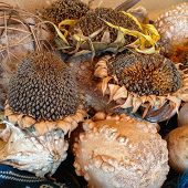 seed pods and gourds