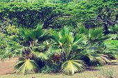 Palm Trees In Hawaii (vintage Style)