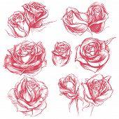 Roses Drawing set