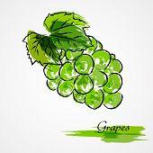 image of lilas  - Hand drawn vector green grape ripe fruit on light background - JPG