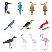 Set of beautiful birds