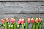 Fresh Tulips Arranged On Old Wooden Backgroun