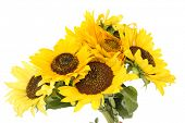 Beautiful bouquet of sunflowers isolated on white