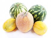 Melons and watermelons isolated on white