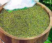 Dry Mung Beans