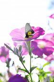 Beautiful flowers with butterfly in garden
