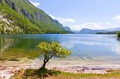 Picturesque View Of Lake Bohinj, Slovenia