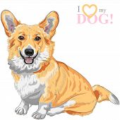 pic of long tongue  - color sketch of the dog Pembroke Welsh corgi breed sitting and smiling - JPG