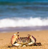 Funny Crab Seafood Posing