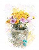Watercolor Digital Painting Of   Autumn Chrysanthemums