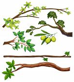 Illustration of different type of branches