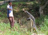 Feeding a Water Monitor