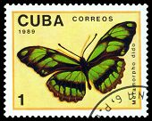 Vintage  Postage Stamp. Butterfly  Metamorpho Dido.