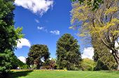 image of manicured lawn  - Queenstown Gardens South Island New Zealand - JPG