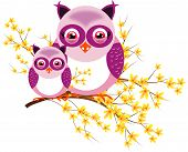 Two Purple Owls On Laburnum