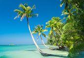 Palm Panorama Coconut Coast