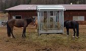 stock photo of horses eating  - horses eating hay on the farm in Switzerland - JPG