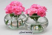 Good morning card with pink carnation flowers