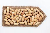 Pointer Of  Burlap With Peanut