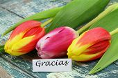 Gracias (which means thank you in Spanish) with colorful tulips