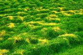 Green Grassy Slope