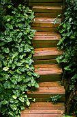 Wooden Garden Staircase