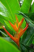 Flower in Costa Rica