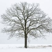 Single tree on a snow covered field