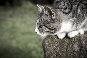 Tabby Cat With Green Eyes Sitting On A Rock