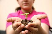 Growht Sapling