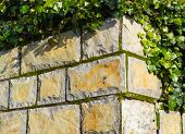 Corner Of Stone Wall With Ivy And Moss