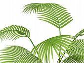 Tropical Plant