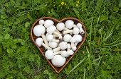 foto of agaricus  - Raw white wild mushrooms champignons Agaricus in basket on grass - JPG