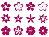 picture of rare flowers  - Pattern with flowers for any floral design - JPG