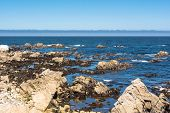 Monterey coast, California