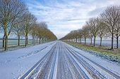 stock photo of row trees  - Row of trees along a snowy road in winter - JPG