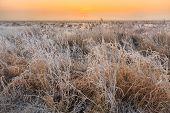 Cold Winter Landscape Of Wetlands At Sunset