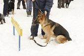 German Shepherd Dog Sitting In Front Of The Barrier Near The Master's Legs On The Dog Training Cours