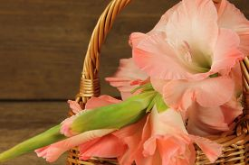 foto of gladiola  - Pink gladiola in wicker basket on wooden background - JPG