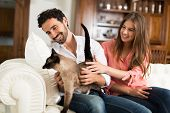 image of couch  - Portrait of an happy couple playing with their cat on the couch - JPG
