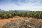 foto of deforestation  - Deforestation - JPG