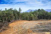 pic of deforestation  - Deforestation environmental problem as rain forest jungle destroyed for human development - JPG