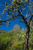 stock photo of municipal  - Inland Gran Canaria Valsequillo municipality view towards Roque del Pino - JPG