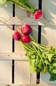 pic of radish  - Tree and one radish on wooden box in garden - JPG