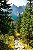 picture of chalet  - Trail leading through the pine forest to the mountain chalet in Gasienicowa valley Polish Tatra Mountains - JPG