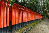 foto of inari  - Torii gates at Fushimi Inari - JPG
