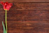 stock photo of bittersweet  - Red tulip flower on old wooden table background - JPG