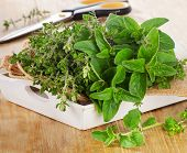 pic of oregano  - Fresh herbs - JPG