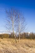 pic of early spring  - Country view from the birch trees in early spring  - JPG