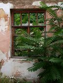 stock photo of abandoned house  - European abandoned house from brick closeup was overgrown with bushes and trees - JPG